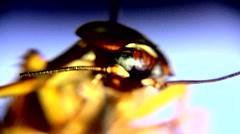 Roach - stock footage
