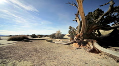 Petrified Tree in Desert Environment Stock Footage