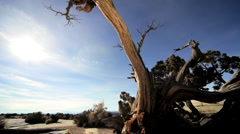 Dead Tree in Desert Wilderness Stock Footage