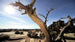 Vegetation in Desert Environment Stock Footage