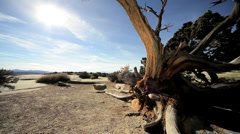Drought Stricken Tree in Desert Landscape Stock Footage