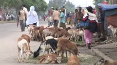 Goats downtown Addis Ababa Stock Footage