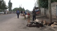 Stock Video Footage of Goats in African city