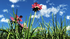 Flowers in the sunshine Stock Footage