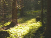 Forest in the Austrian Alps Stock Footage