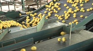 Stock Video Footage of Lemons factory