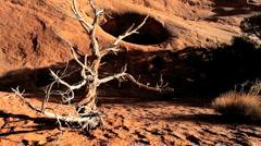 Petrified Tree in Barren Environmental Landscape Stock Footage