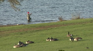 Stock Video Footage of Geese rest while an angler fishes in Rutland Water.