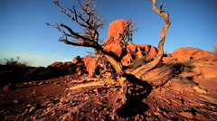 Stock Video Footage of Balanced Rock & Dead Tree