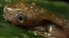 Tadpole changing into a frog Stock Footage