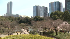 Cherry Blossom inTokyo Ueno park - wide Stock Footage