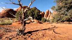 Desert Beauty in Arid Environment - stock footage