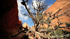 Dead Tree Caused by Desert Drought Stock Footage