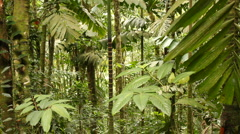 Interior of tropical rainforest Stock Footage