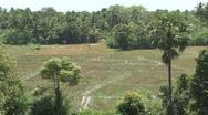 Sri Lanka landscape with birds Stock Footage