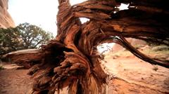 Drought Damage to Desert Vegetation Stock Footage