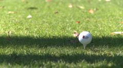Driver from tee box (2 of 2) - stock footage