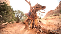 Drought Stricken Tree in Desert Landscape Stock Footage