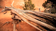 Environmental Damage to Tree Life  Stock Footage