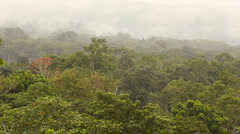 View over lowland tropical rainforest, Ecuador Stock Footage