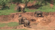 Stock Video Footage of Elephants at river, Sri Lanka
