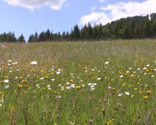 Meadow in the alps Stock Footage