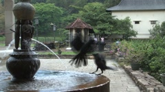 Crows at The Temple of the Tooth, Kandy, Sri Lanka Stock Footage