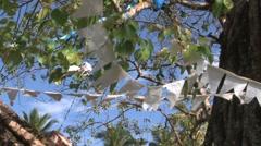 Praying flags in Bodhi-tree Stock Footage
