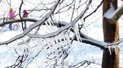 Ice on a frozen tree Stock Footage
