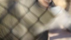 Fenced monkey Stock Footage