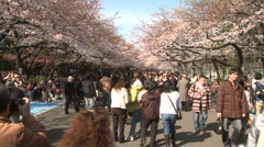 Cherry blossoms Tokyo  Stock Footage