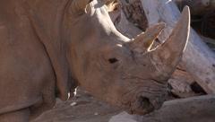 Rhinoceros 2 Stock Footage