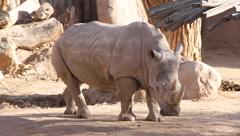 Rhinoceros 1 Stock Footage