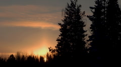 Sunset&Tree silhouettes1 Stock Footage