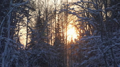 Snowing forest sunset Stock Footage
