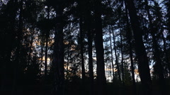 Forest clouds timelapse Stock Footage