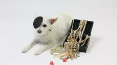 Dog Pirate Protects Jewels Stock Footage