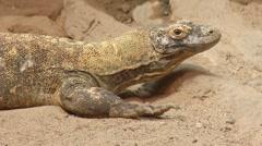 reptile 0025LE Stock Footage
