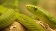 Snake 0041W9 Stock Footage