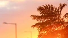 Plant fern silhouette Stock Footage