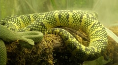 Reptile 00540R Stock Footage
