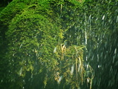 Waterfall 4 Close up Stock Footage