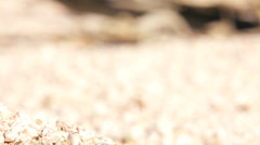 Dead Fish on Dry Lake Bed  Stock Footage