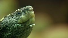 sea turtle 0069IG - stock footage