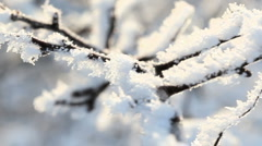 frosty tree branch - stock footage