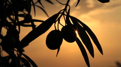 Olives on sunset Stock Footage