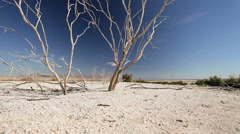 Bleached Tree Branches in Dry Lake Bed - stock footage