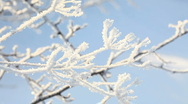 Snow branch Stock Footage