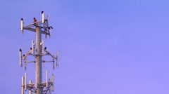 Buzzards on cell phone tower 02 Stock Footage