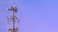 Stock Video Footage of Buzzards on cell phone tower 02
